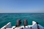 Tauchen bei Sir Bani Yas Island