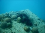 Schiffswrack vor Sir Bani Yas Island