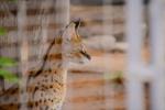 Lux Al Ain Zoo