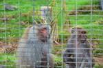 Affen Al Ain Zoo