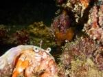 Krebs Unterwasser