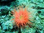 Unterwasserlebewesen