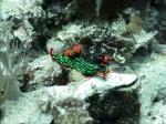 Unterwasserschnecke