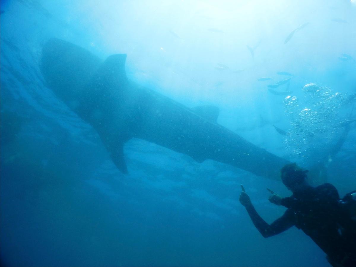 Wahlhai Unterwasser